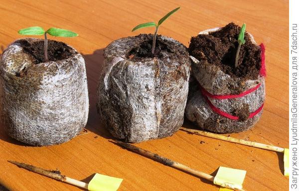 В таблетках выращивать удобнее.