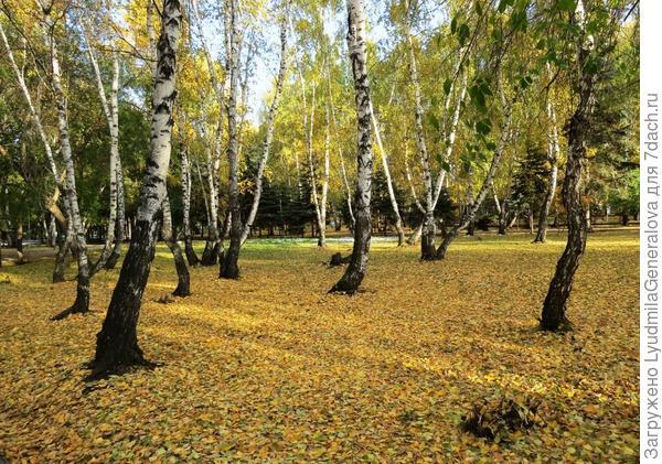 Так осенью в нашем парке
