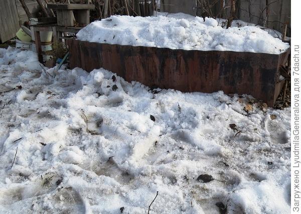 Потом наполнила снегом ёмкость, чтобы была на первое время талая вода для полива рассады.