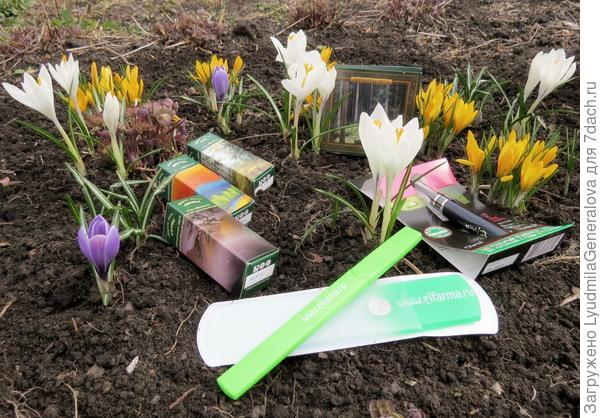 Весенний приз на фоне крокусов