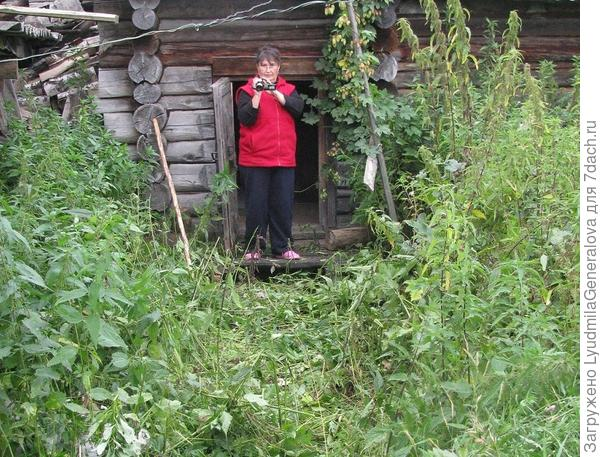 Приехавшая сестра снимала на видео всё подряд. Таких травяных джунглей она не видела. И меня быстро приравняли к Агафье Лыковой.