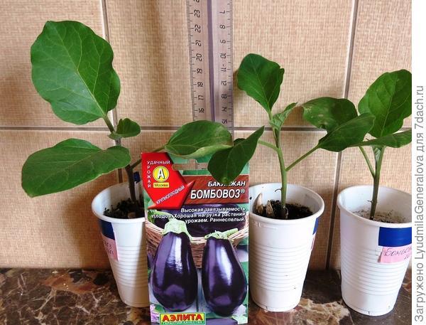 Лучшие 5 растений из десяти - для  дальнейшего тестирования.