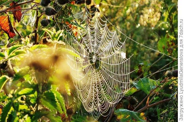 Потому что очень хочется бывать там почаще, чтобы увидеть - просто паутину.