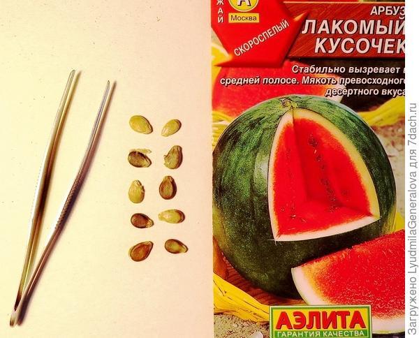 Десять семян для анализа на всхожесть.