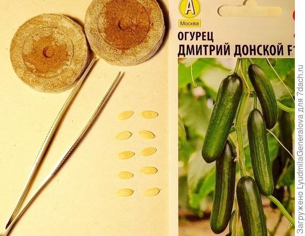 10 семян для анализа на всхожесть