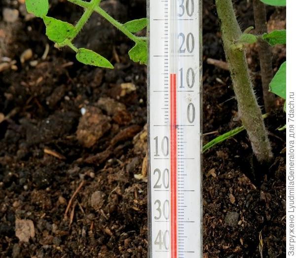 Термометр на грядке, накрытой  спанбондом, в 7 часов вечера показывает +15, в парнике на пару градусов выше, если рамой закрыть. Но она всегда немного  приоткрыта.