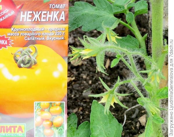 Крупный план цветка томата
