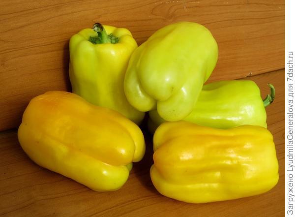 14 сентября. Первый урожай перца.