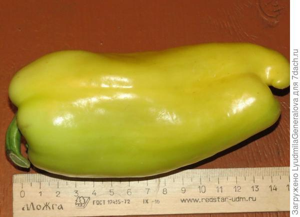 Длина перца - 17 см.