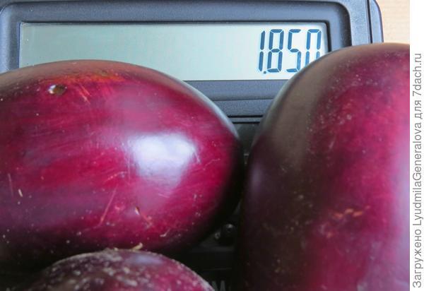 Урожай с  4- х кустов  - 2 кг 500 гр