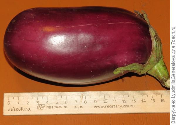 29 августа. Первый плод со 2-го куста.