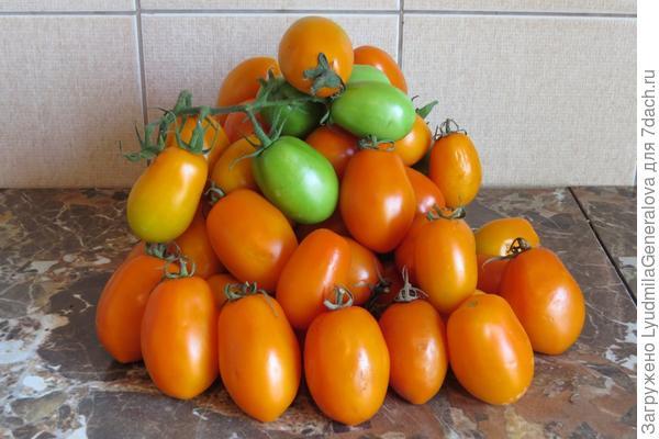 Зрелые плоды томата Елисей
