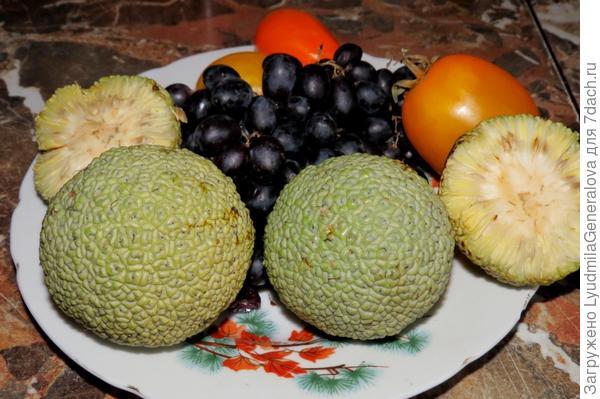 Плоды привезены из Евпатории. Сказано было, что их спиртовый настой применяют для лечения суставов.