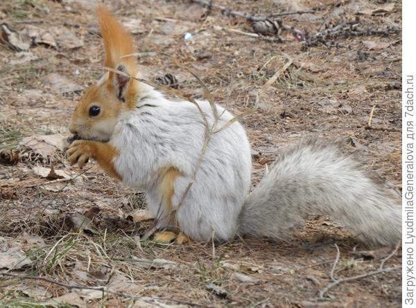 Весной видок у них не презентабельный, особенно если зима морозная и долгая.