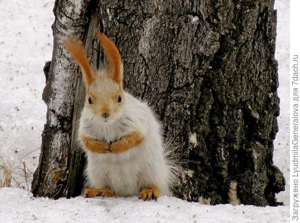 """Но в морозные дни они отсиживаются в дуплах.(видать """"рукавички"""" забыл одеть)"""