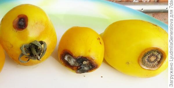 """Повреждённые плоды томата """"Цитрусовый сад"""" (фото 1)"""