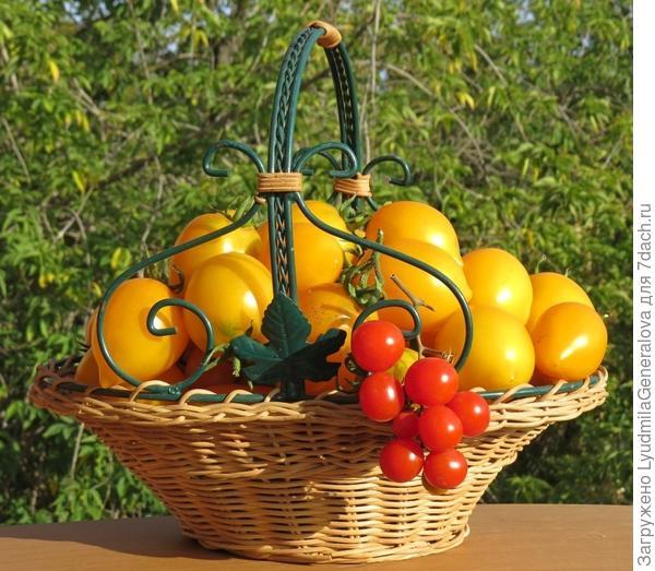 Корзинка с помидорами