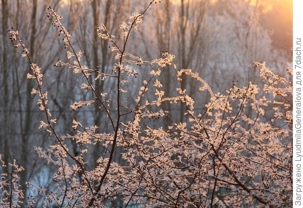 Посмотрела  у Софии Лебедевой фотоотчёт. Зелёная травка - на Новый год! Думаю  - покажу Омск. Может кому-то интересно будет посмотреть сибирскую зиму.