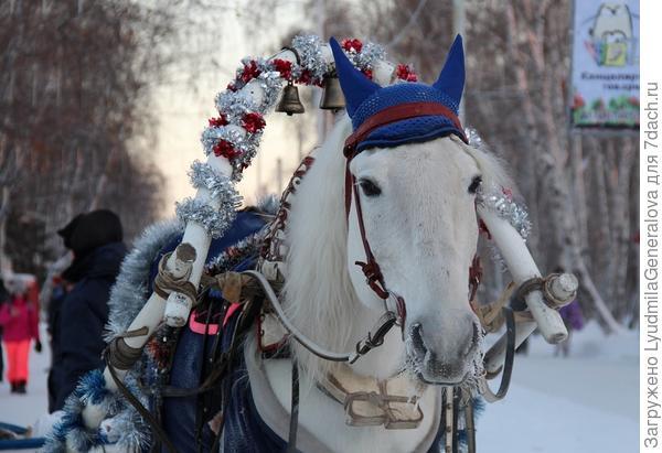А лошадки  трудятся круглый год.