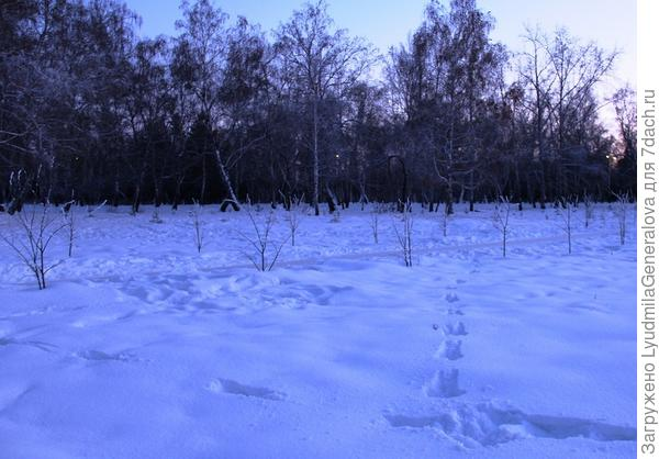 Снега по-прежнему мало. Снимки сделаны вечером на Рождество.