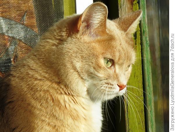 Но время идёт. Приходу весны рады все. И даже кошки.