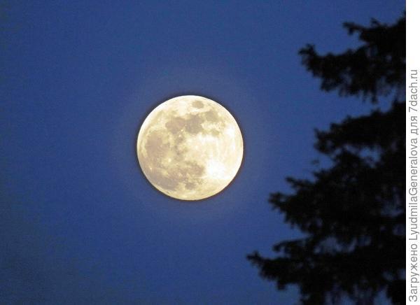 """Приблизила"" Луну. Небо чистое. Её хорошо видно."