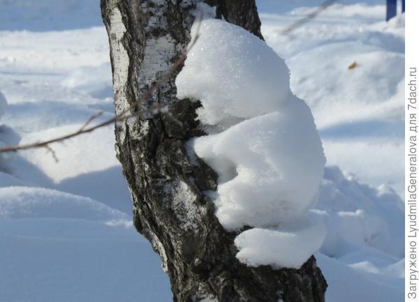 Снежок, прощаясь, приобнял  берёзку.
