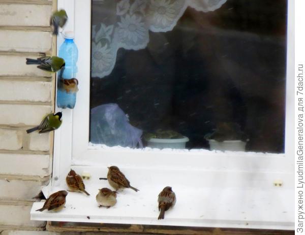 Днём до минус 13-15. Птички всегда найдут ваши кормушки!