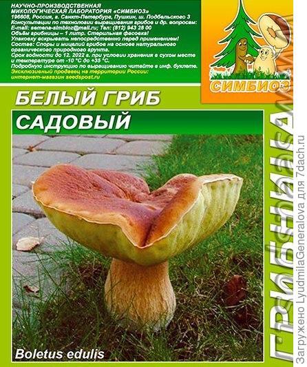 Грибница субстрат микоризный. Белый гриб Садовый