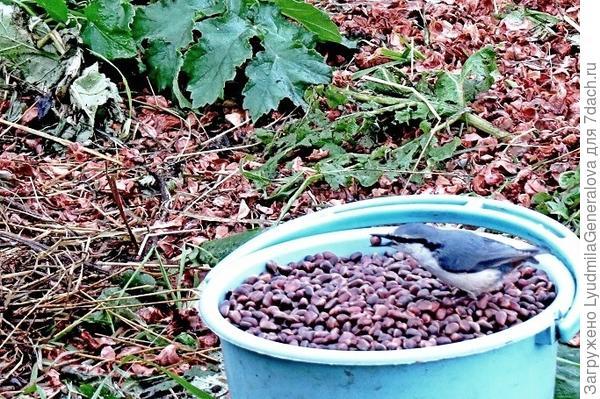 Птица никогда не возьмёт пустой орех или пустую семечку. Видели же как воробьи, синицы... потрошат подсолнухи? пустые, даже обманчиво крупные семечки остаются в шляпке.