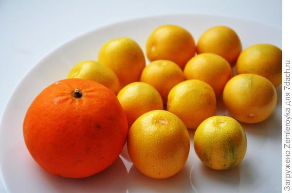 Съедобные фрукты