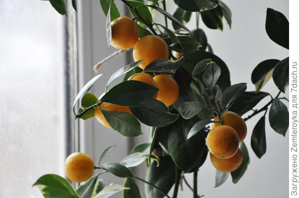 Жизнерадостные фрукты