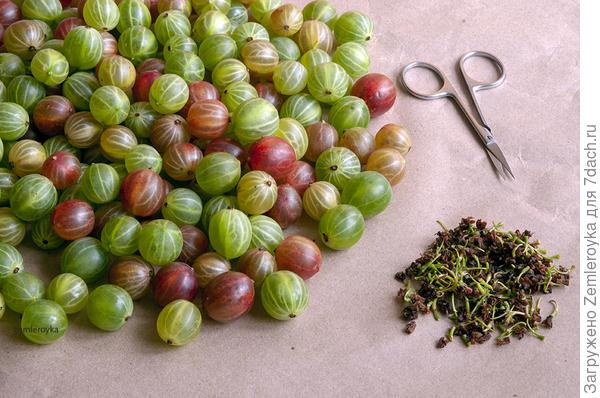 Маринованный крыжовник - пошаговый рецепт приготовления с фото