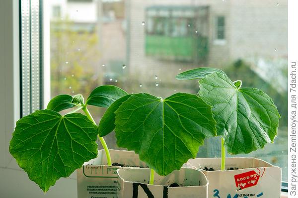 Настоящие листья
