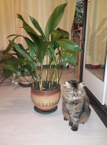 Коты-цветы