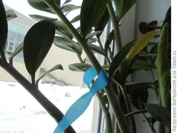 Вот так это будет выглядеть на растении