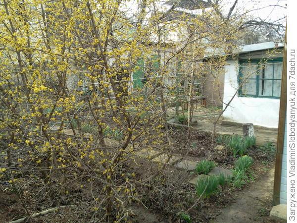 весной вернее февраль