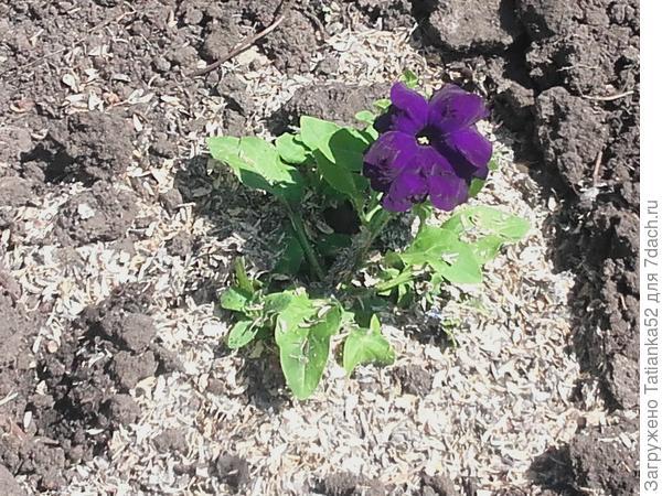 14 апреля. Первый цветочек