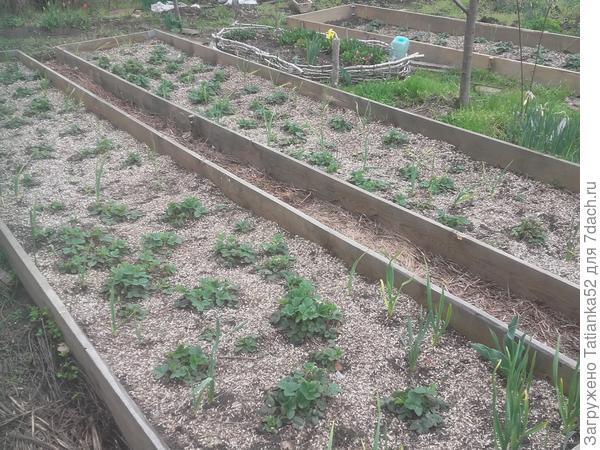 Мои опыты по органическому земледелию. Мульчирование
