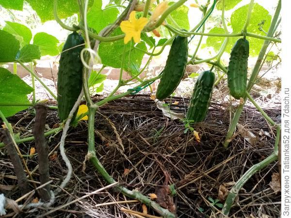 Мой опыт органического земледелия. Удобрения
