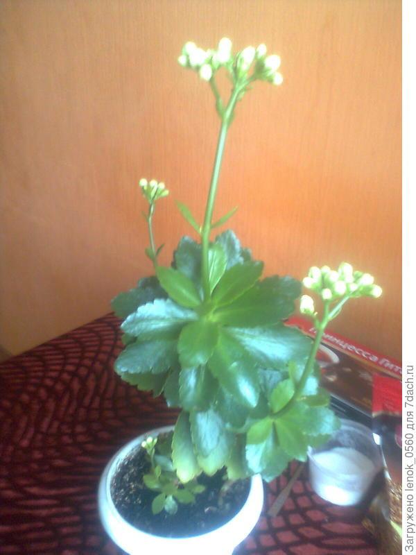 Подскажите как называется этот цветок!