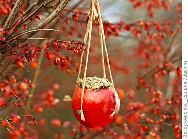 Съедобная кормушка из яблока. Фото с сайта http://selenaart.ru