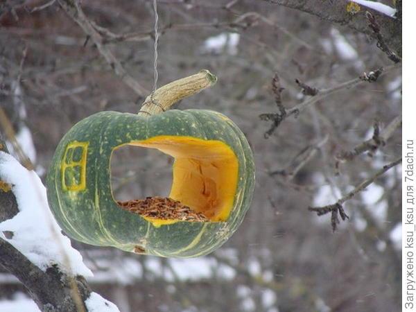Кормушка из тыквы. Фото с сайта ipnn.ru