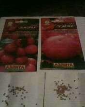 Cемена томатов Пузатики и Обжорка. 90 шт и 60 шт соответственно.