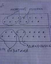 Схематичное расположение саженцев томата Диковинка