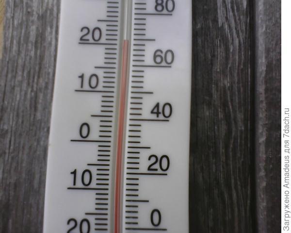 + 21 градус