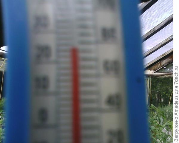 +24 градуса