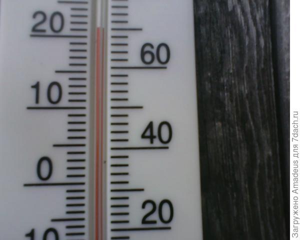 +21 градус