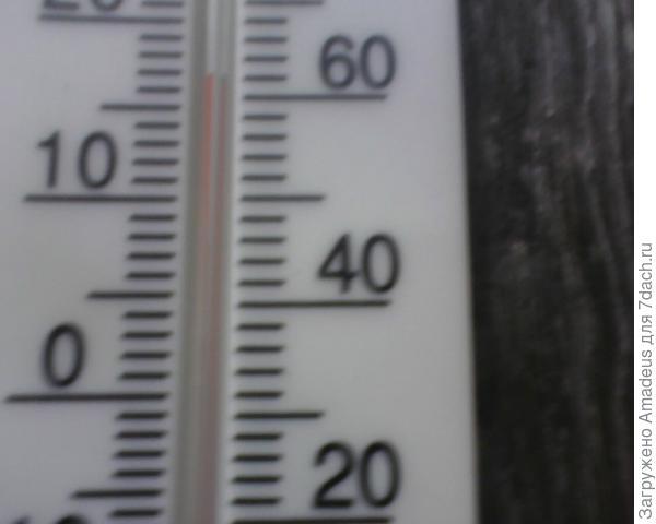 + 17 градусов