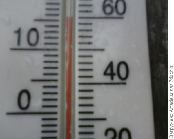 + 16 градусов.